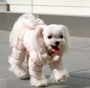 Posh Pooch Coat Bodysuit